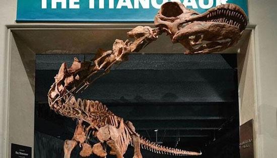 دایناسور پاتاگوتایتان بزرگترین حیوان کره ی زمین!