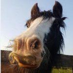 اسب هایی با سبیل های خنده دار و جالب!
