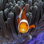 دنیای وسیع و زیبای زیر آب ها را تماشا کنید!