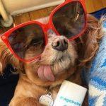 سگ های اینستاگرام که بیشتر از انسان ها طرفدار دارند!