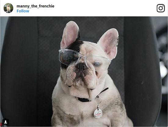 سگ های اینستاگرام