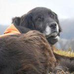 محافظت یک سگ از یک طوطی در خطر انقراض!