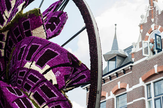 رژه گل در هلند
