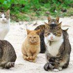 ابتکار ژاپنی ها برای خلاص شدن از دست گربه های مزاحم!