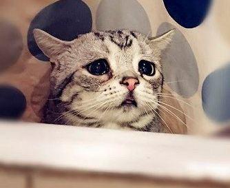 یکی از غمگین ترین گربه های جهان را ببینید!