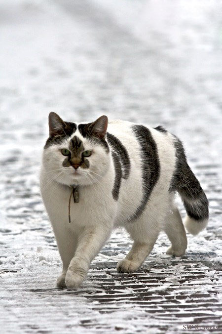 گربه های منحصر به فرد