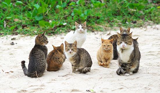 خلاص شدن از گربه های مزاحم