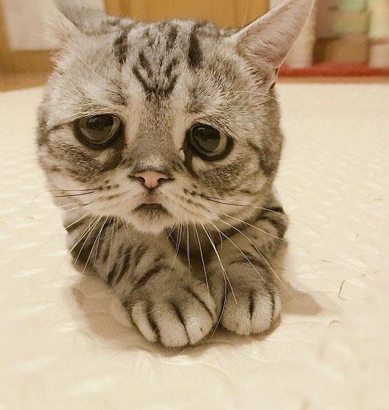 غمگین ترین گربه جهان