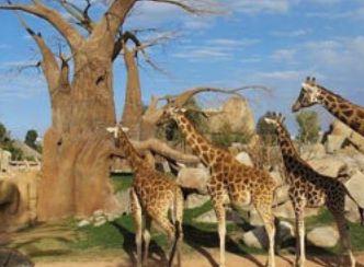 یکی از بهترین باغ وحش های دنیا که قفسی ندارد!
