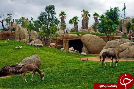 باغ وحش بدون قفس