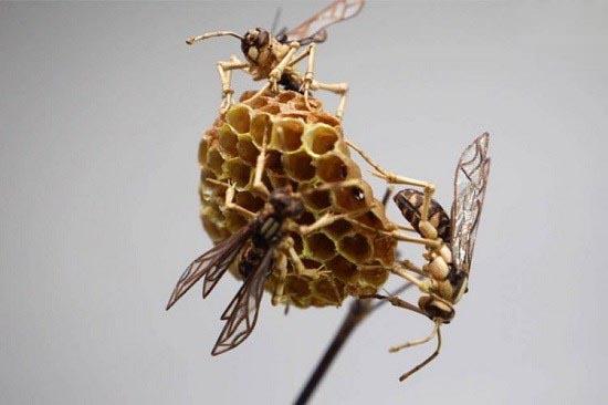ساخت حشرات از بامبو