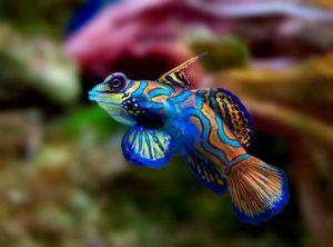 چند نوع از زیباترین حیوانات موجود در طبیعت!(۱)