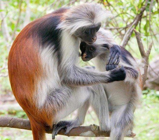 زیباترین حیوانات طبیعت