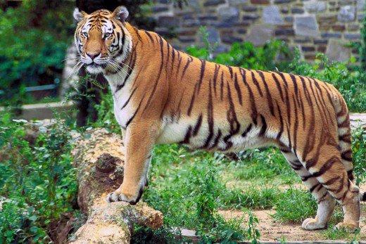 زیباترین حیوانات