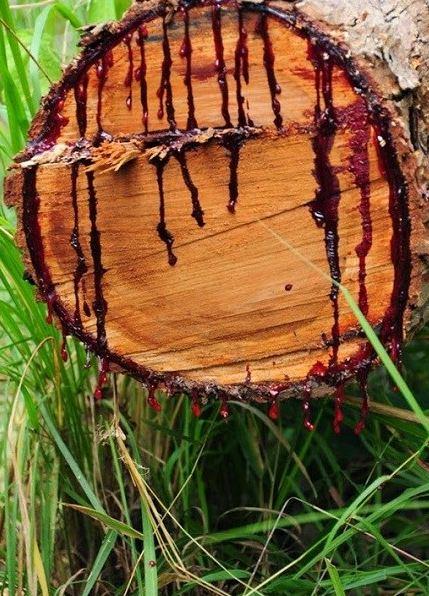 خونریزی درخت با قطع شدن