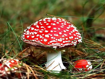 کشف یک قارچ عجیب توسط کشاورز چینی!