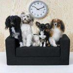 طراحی های جالب مبلمان برای حیوانات خانگی!