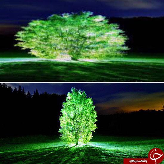 درخت های نورانی