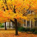 زیباترین پاییز دنیا را باید در این مکان دید!