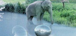باغ وحشی بی نظیر با نام zootopia در حال ساخت در دانمارک!