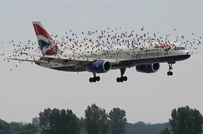 برخورد شدید یک پرنده به هواپیما حین پرواز!