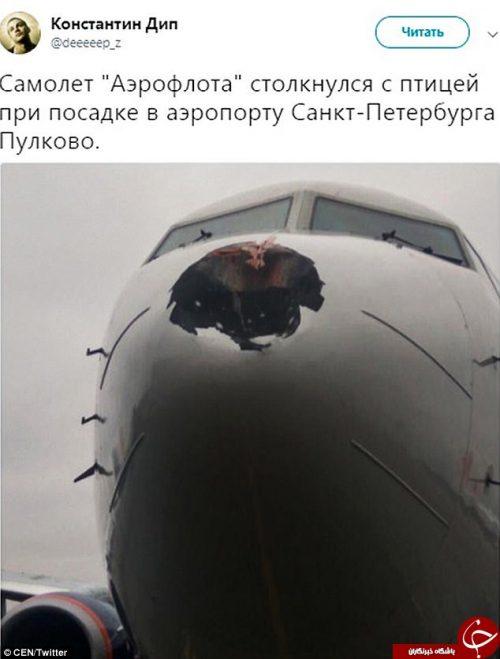 برخورد پرنده با هواپیما