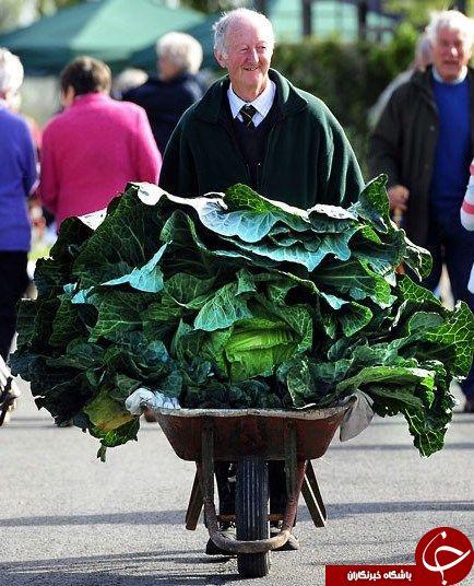 پرورش محصولات کشاورزی