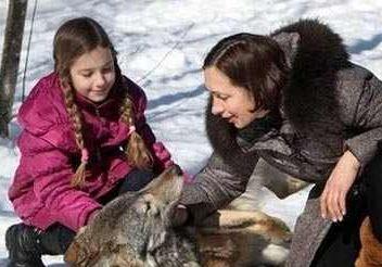 زندگی دوستانه یک خانواده با گرگ های وحشی!