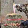 جشن تولد اسب ها در لندن با یک کیک متفاوت!