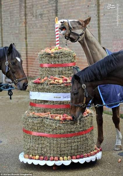 جشن تولد اسب ها در لندن