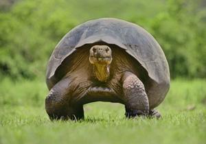 حیواناتی که خیلی آرام روی زمین حرکت می کنند!