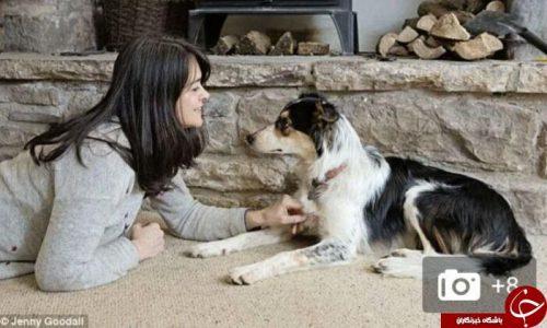 صحبت با حیوانات