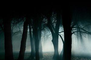 پتی مایر عکاس کانادایی که در جنگل با صحنه ای عجیب روبرو شد!
