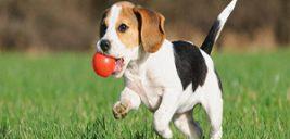 سگ با وفا که با مرگ خود صاحبش را از دست مار نجات داد!