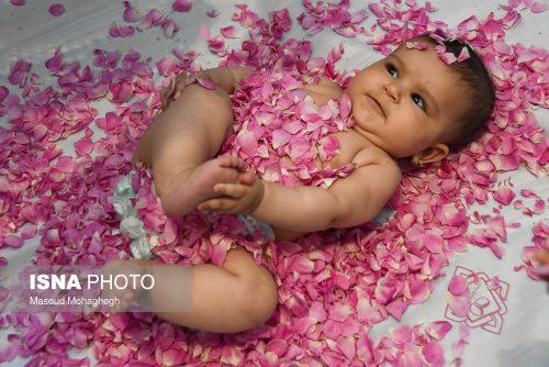 آیین گل غلتان نوزاد