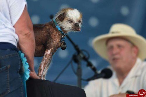 زشت ترین سگ های دنیا