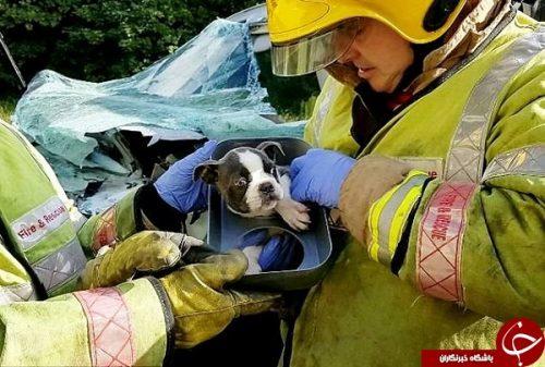 نجات سگ بعد از تصادف