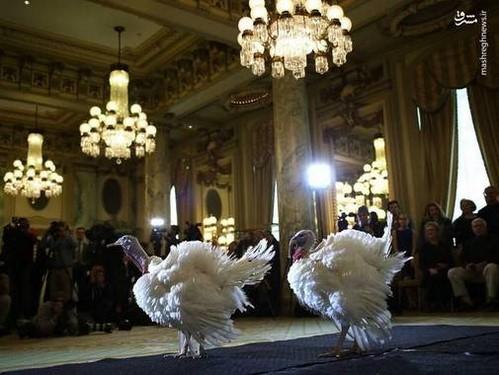 دونالد ترامپ و خانواده اش در جشن شکرگزاری و حمایت ترامپ از رسوایی دخترش!