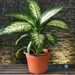 گیاه آپارتمانی سمی و خطرناکی که در خانه هایتان جا خوش کرده!