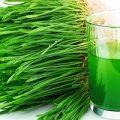 آب سبزه گندم را در اسموتیهای خود استفاده کنید تا از فواید آن بهره مند شوید