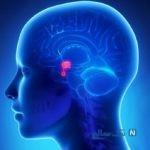 از علایم تومور هیپوفیز، ترشح شیر از سینه مردان!