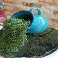 آموزش کاشت سبزه عید نوروز به شکل آبشاری+تصاویر