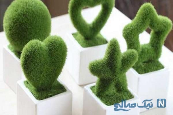 آموزش کاشت سبزه به شکل جاشمعی بسیار شیک برای نوروز+عکس