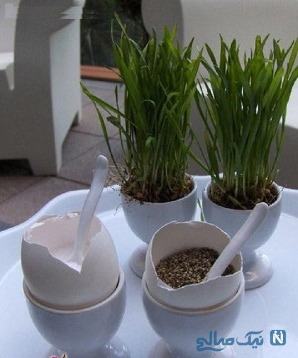 کاشت سبزه به شکل های مختلف