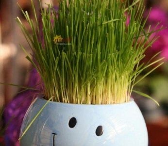 آموزش ساخت سبزه به شکل جا شمعی یا گلدون ایده ای زیبا + تصاویر