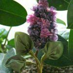 آموزش شکوفه روبانی کاری بسیار زیبا برای تزیین وسایلمان