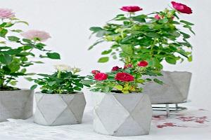 ساخت گلدان بتنی با پودر بتن و مقوا