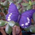 ساخت کاردستی پروانه های تزیینی + تصاویر