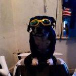 تصاویری از یک سگ پولدار که صاحب ۳ خودرو لوکس است!