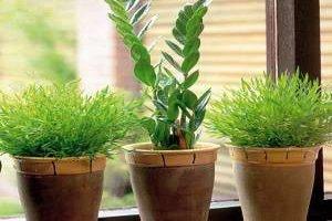 گیاهان خانه را برای سرما آماده کنید
